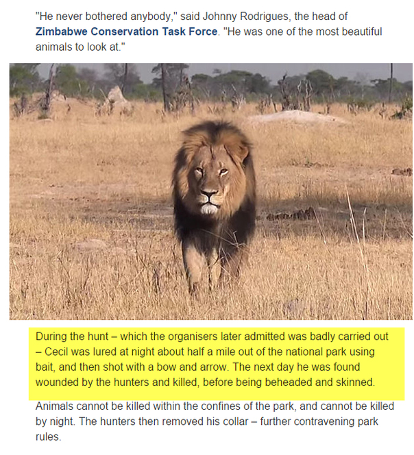Cecil The Lion 6