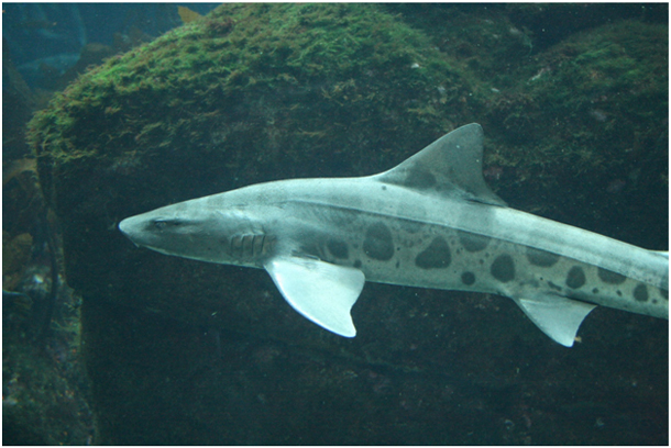 7. New Species of Sharks